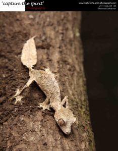#Leaf Gecko #Perinetpark #Madagascar