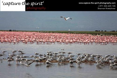 Lake Nakuru with its feathered inhabitants