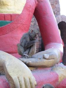 #monkey #monkeytemple #kathmandu #swambhunath