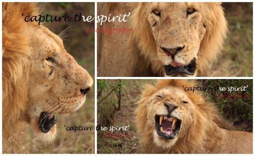 #lion #masaimara