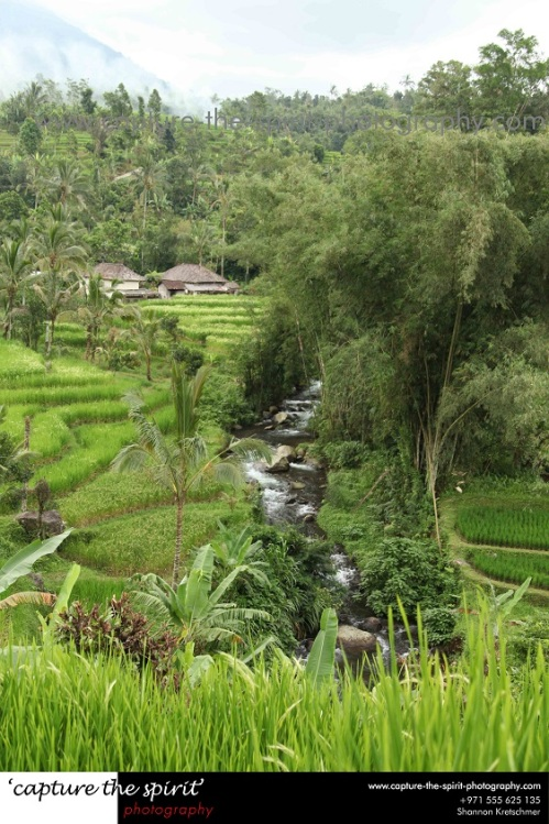 Subak Irrigation
