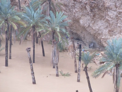 The Forsaken Donkey,  Wadi Shab