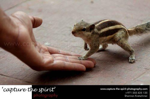 #squirrel #agrafort